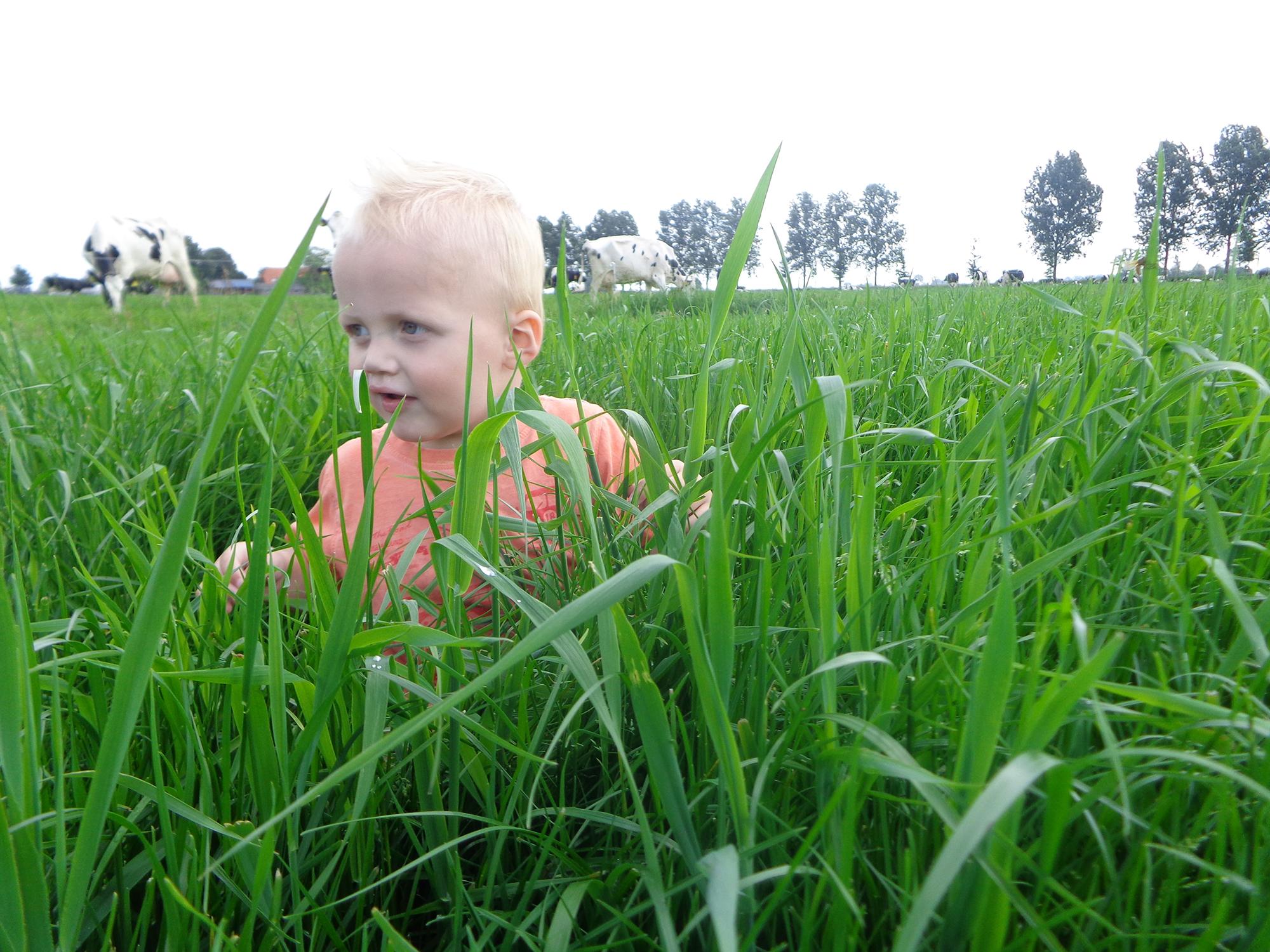De Groene Weide - slider 2